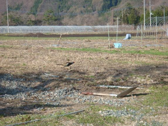 ようこそ!みのり農場へ(14) 星野敦子