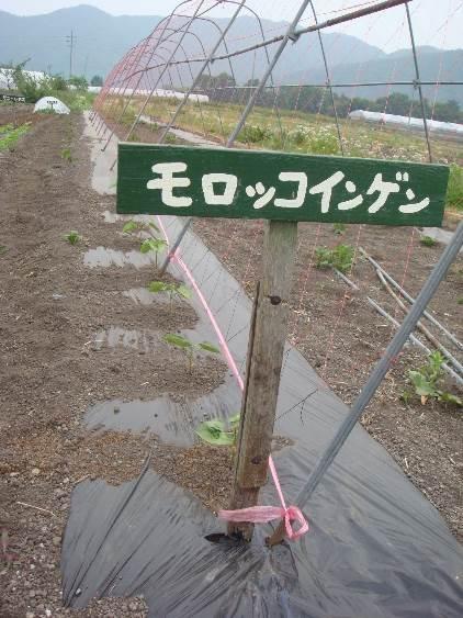 ようこそ!みのり農場へ(16) 星野敦子