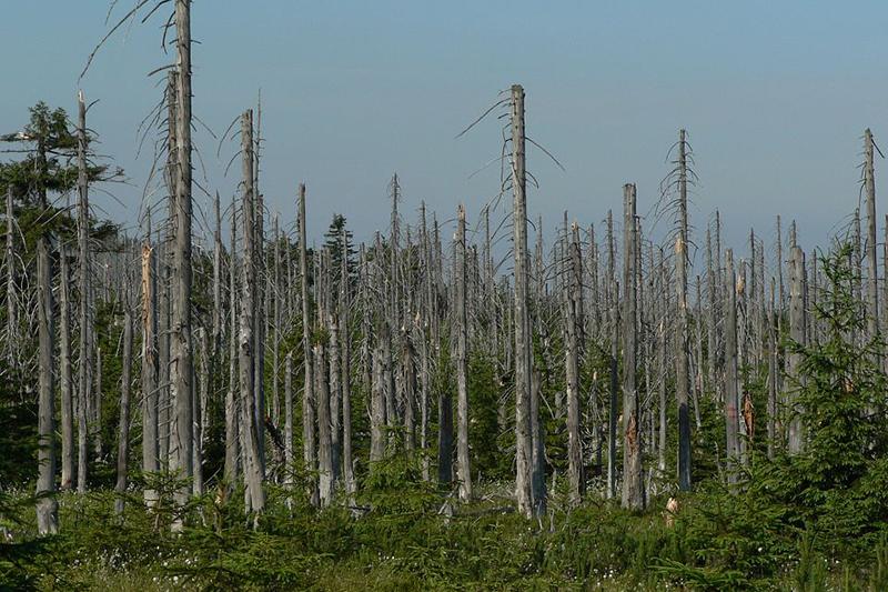 環境問題の一つである酸性雨で被害を受けた木々