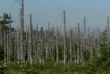 ローマ教皇、9月1日を「環境保護のための世界祈願日」に制定