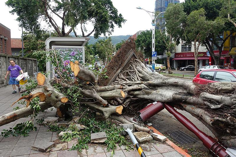 台風13号の強い風でなぎ倒された街路樹=8月9日、台湾・台北で(写真:FramaKa)