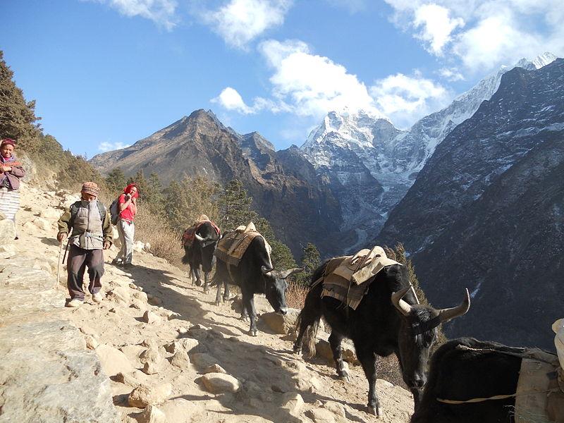 ネパールのある山岳地帯での交通手段(写真:Krish Dulal)