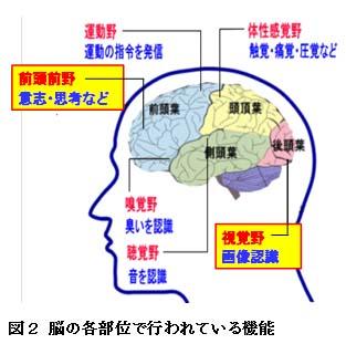 【科学の本質を探る㉜】脳科学の未解決問題(その1)疑問視される脳機能局在論 阿部正紀