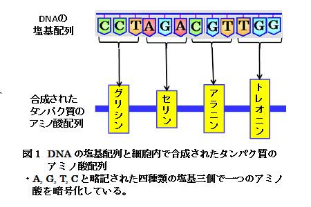 【科学の本質を探る㊱】生物進化論の未解決問題(その1)分子レベルの進化と形態レベルの進化の橋渡し