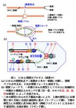 【科学の本質を探る㊶】生物進化論の未解決問題(その6)化学進化による生命の起源説 阿部正紀