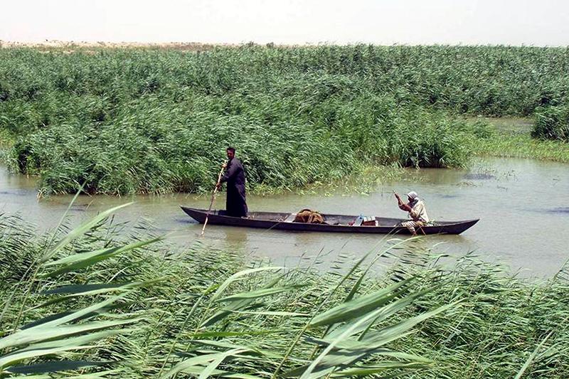 「エデンの園」があったと考えられているイラク南部の湿地帯が世界遺産に