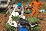 依存症更生施設「ティーンチャレンジ」、今年から新たに農業更生プログラムを開始