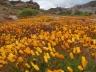 FINE ROAD―世界の教会堂を訪ねる旅(37)南アフリカ共和国の教会② 西村晴道