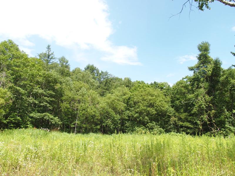 北星学園が所有する盤渓地区の森林(写真:北星学園提供)