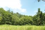北星学園、所有する森林の包括整備に向けて札幌市森林組合と森林経営委託契約を締結