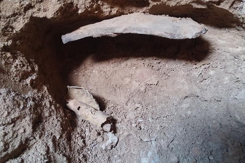 死海文書の12番目の洞窟発見、60年ぶり 写本自体は盗掘被害に