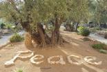 ペンテコステに聖地の平和求める祈りを 世界教会協議会が呼び掛け