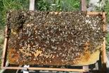 5万匹の「ミツバチ聖歌隊」が参加、英国の大聖堂で10月にコンサート