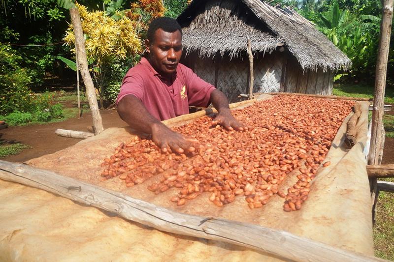 カカオ豆を乾かすジョージ・モリーさん(写真:ワールド・ビジョン)