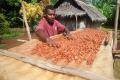 ワールド・ビジョンの訓練受けたバヌアツのカカオ農家、世界トップ50に