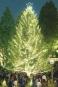 明治学院大 クリスマスの喜びを共に クリスマスツリー点灯式開催