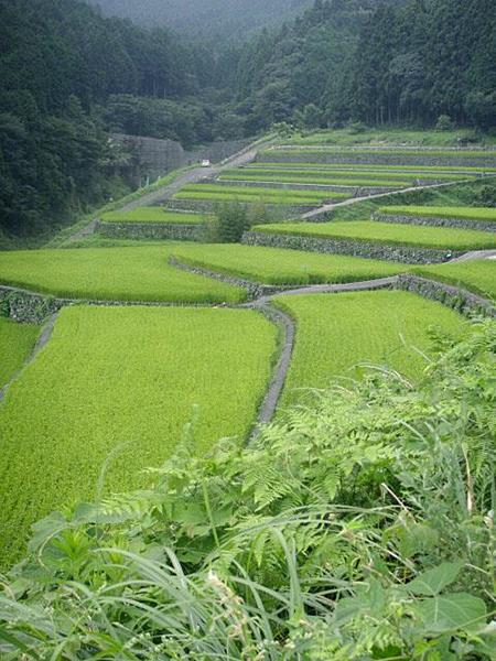 日本の原風景である棚田(たなだ)=2018年7月21日、大分県東峰村で