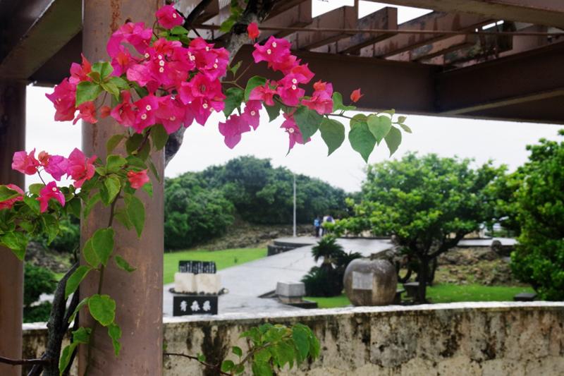 今年の「慰霊の日」(6月23日)は雨となった。74年前、この付近は焦土と化した。今でも大きな木はほとんどない。雨の平和祈念公園では、鮮やかな濃いピンク色のブーゲンビリアの花も寂しげに見えるのだった。(写真:山本英夫撮影、ブログ「<a href='http://ponet-yamahide.cocolog-nifty.com/blog/' target='_blank'>ヤマヒデの沖縄便りⅢ</a>」より許可を得て転載)<br />