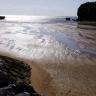 月桃通信(15)首里城より大切なもの―それは辺野古・大浦湾の悠久の海 石原艶子