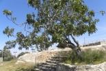 京大式・聖書ギリシャ語入門(18)「よい実を結ばない木はみな、切り倒されて火に投げ込まれる」―受動態(1)―