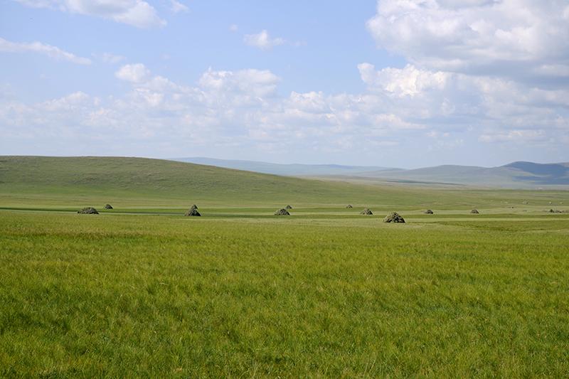 内モンゴル自治区の草原(写真:mayanming)