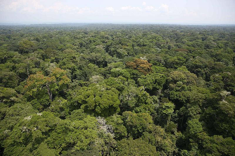 コンゴ民主共和国北東部イトゥリ州の熱帯雨林(写真:MONUSCO / Abel Kavanagh)