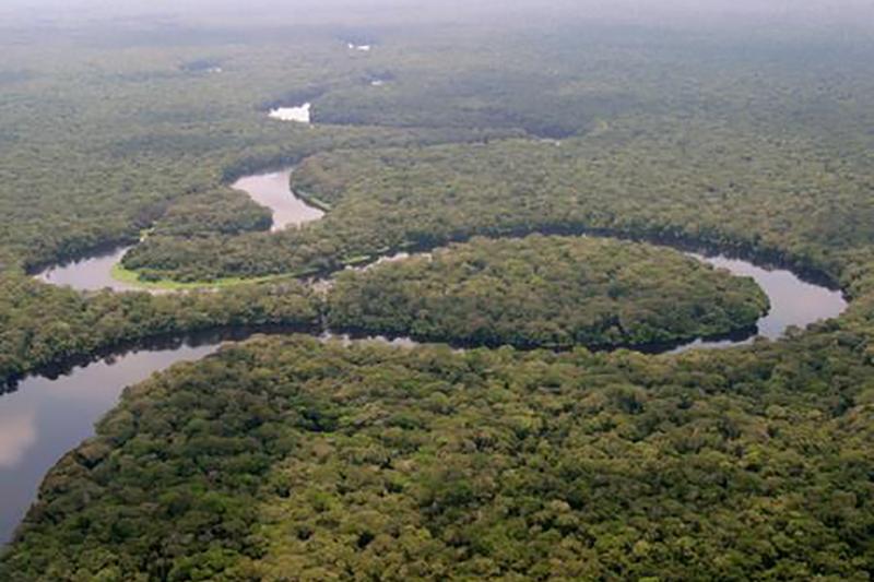 熱帯原生林の広がるコンゴ民主共和国のサロンガ国立公園(写真:Radio Okapi)